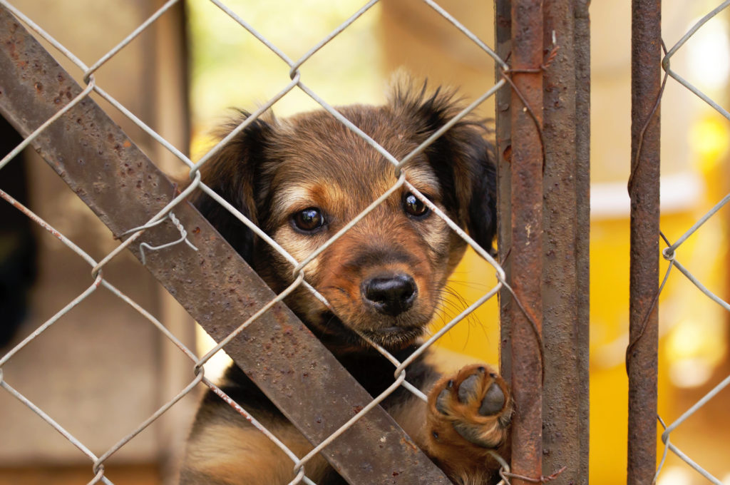 Why you should adopt a dog (and not buy a new puppy)